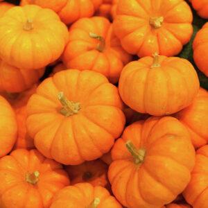 萬聖節南瓜香港 halloween pumpkin hong kong