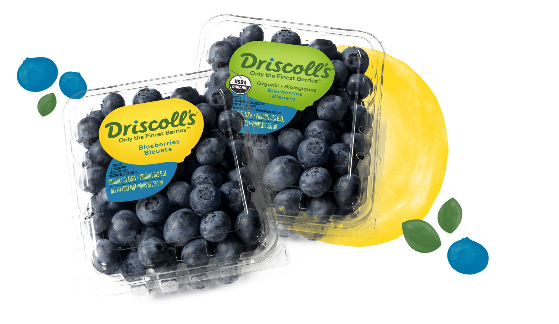 CC1 Blueberry