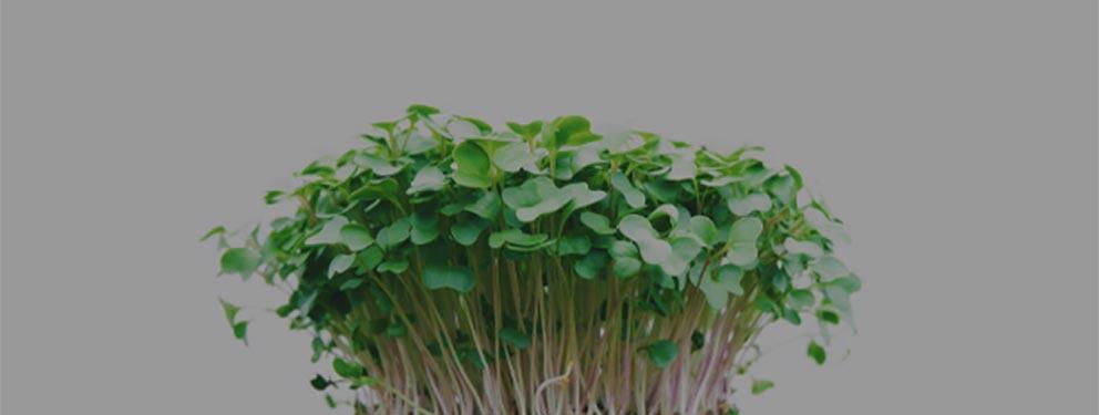 micro green2